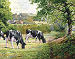 Summerhill Farm:  by Anthony Forster